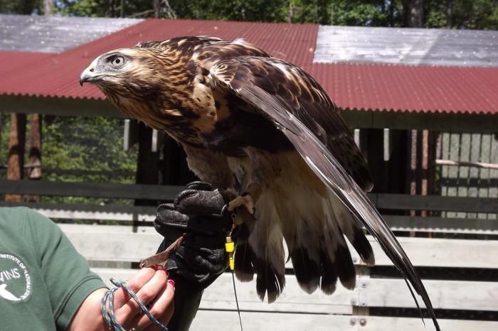 15.  VINS Nature Center, Quechee