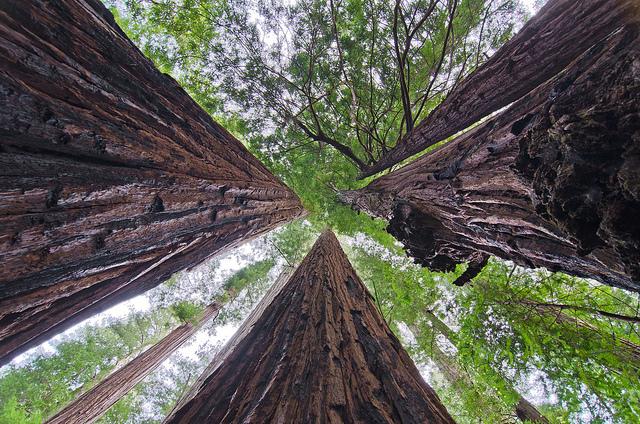 19. Humboldt State Park