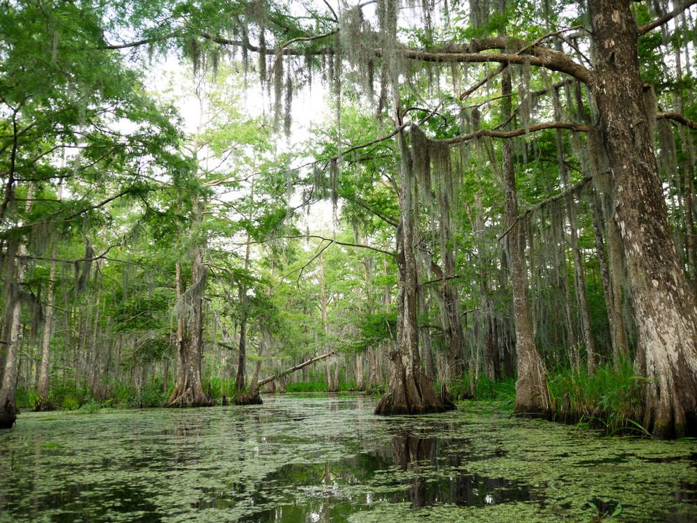 Top 9 Places To Go Hiking In New Orleans