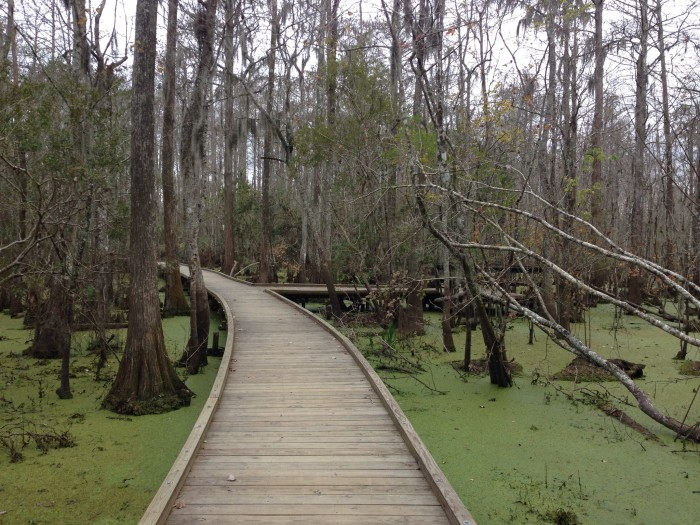 8) Joyce Wildlife Management Area
