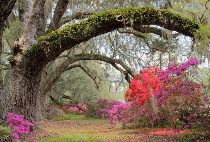 magnolia-gardens