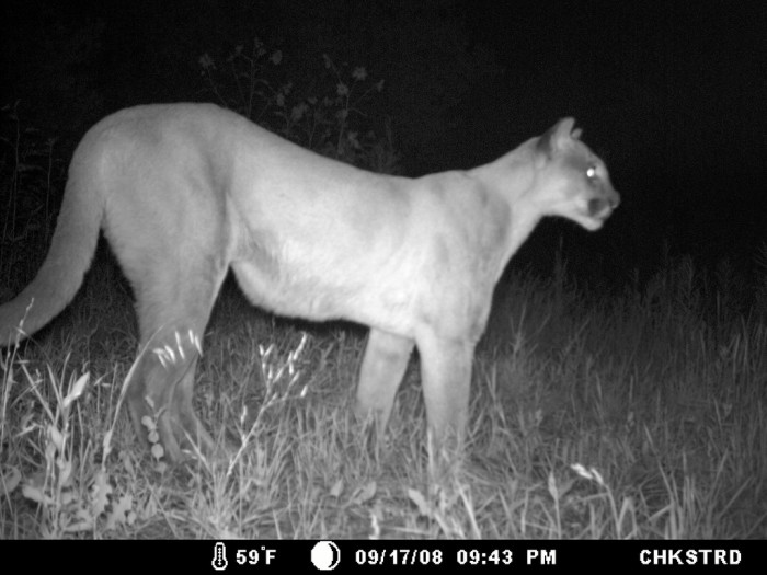 7. We have dangerous wildlife here such as bears, snakes, and mountain lions.