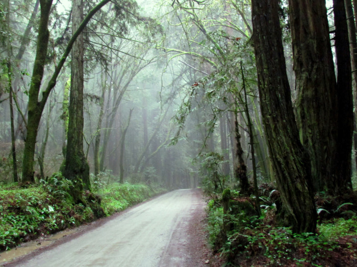 15. The Forest of Nisene Marks State Park