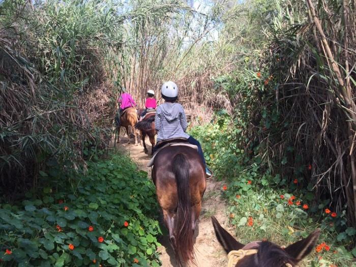 7. Horse Back Riding