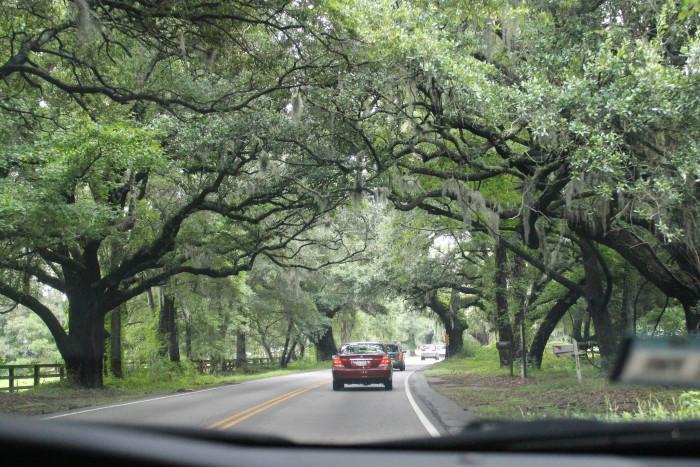 oak-trees-2