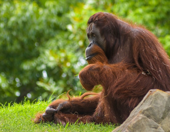 3. Spend a day at the Tulsa or Oklahoma City Zoo admiring all the animals and habitats.