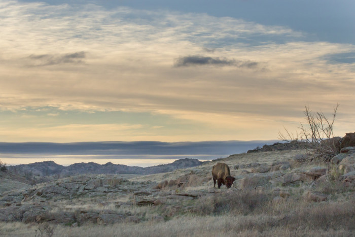 5. Or the Wichita Mountain Wildlife Refuge to see Bison and other wildlife.