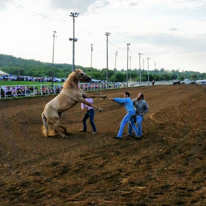13. Attend the world's largest amateur rodeo.