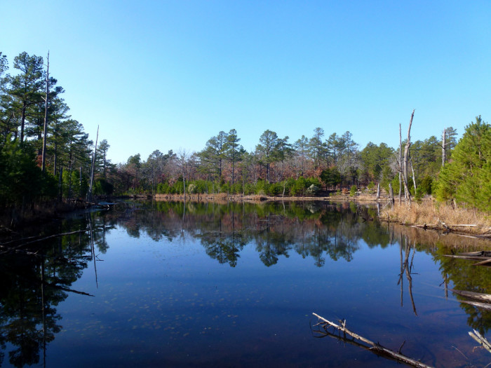 Follow along to the Cattail Pond Trail, then return back.