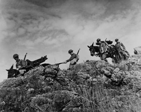 5. With their guns and auxiliary equipment slung on the backs of army mules, these trainees break through thick forests, ford streams, and scale mountain ranges at Fort Sill Field Artillery Replacement Training Center, Oklahoma, 1942.
