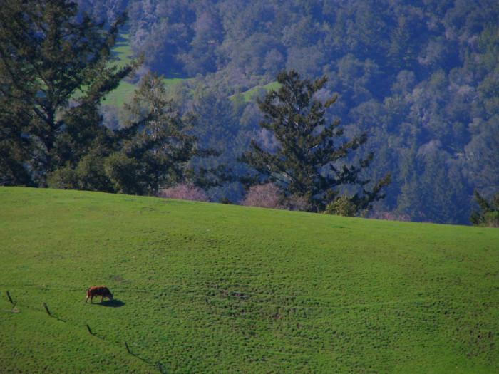 4. Portola Redwoods State Park