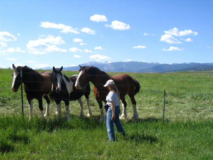 12. Ranch life.