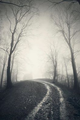 1. A eerie foggy scene on a one lane country dirt road.