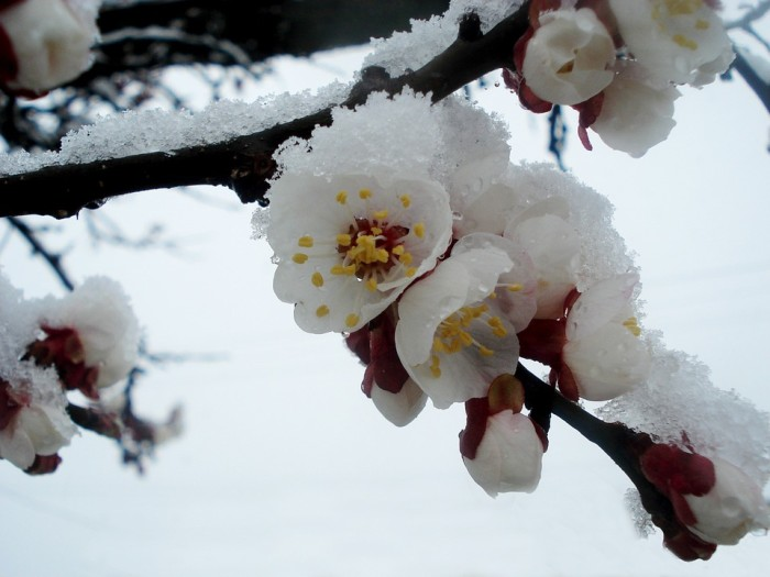 1. The Tease of Spring