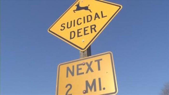 """Suicidal Deer - Next 2 Miles"""