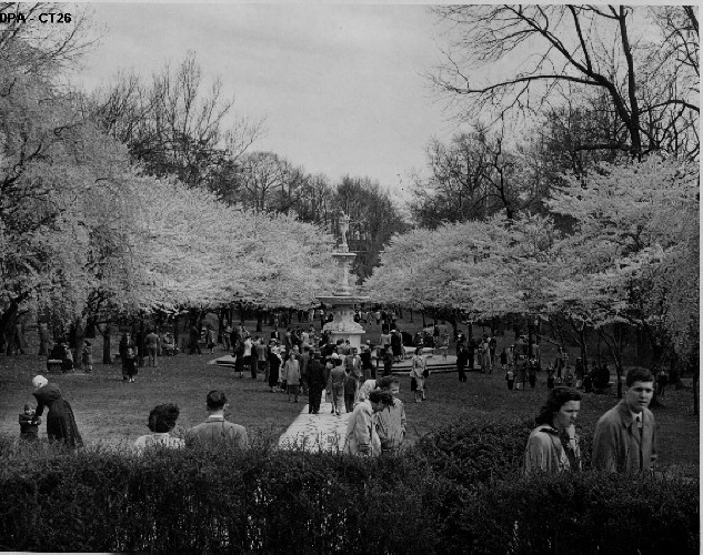 14. Vistors take a stroll through Brandywine Park in Wilmington to view the beauty of the blooming cherry trees.