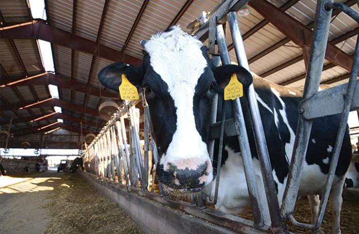 5. Wright's Dairy Farm, North Smithfield
