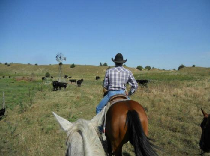 1. Experience life on a working ranch at Rowse's 1+1 Ranch in Burwell.