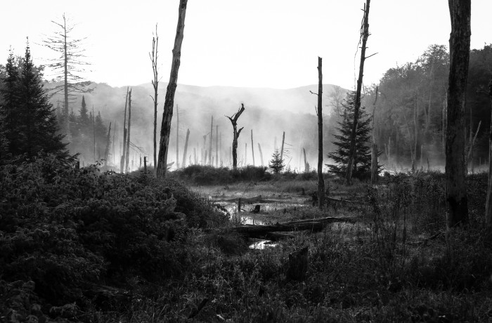 2. Up in the region of our Adirondack High Peaks you'll find this eerie setting at the Mount Van Hoevenberg Trailhead.