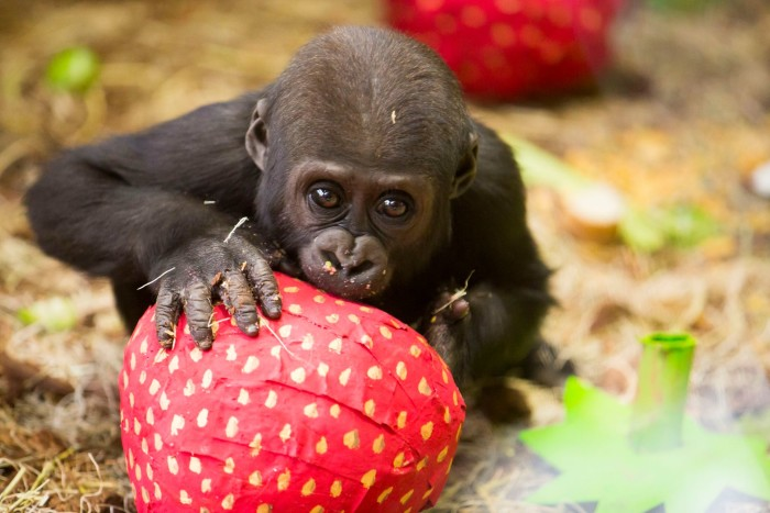 7. See animals at the Lincoln Park Zoo.