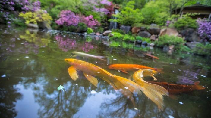 14. Stroll around Anderson Japanese Gardens.