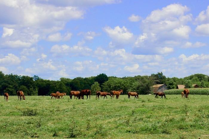 1. The setting of Arthur, Illinois is idyllic.