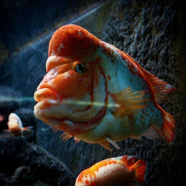 9. Shedd Aquarium