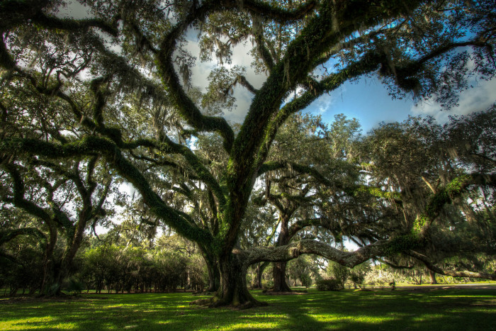1. Avery Island is a dome of rock salt that's 5 kilometers long and 4 kilometers wide.
