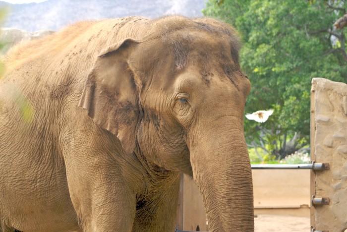 10. Honolulu Zoo