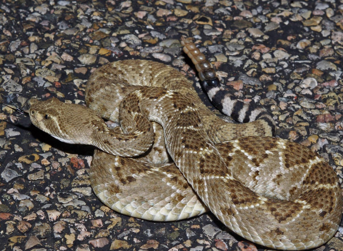 9. Have you seen a rattlesnake?