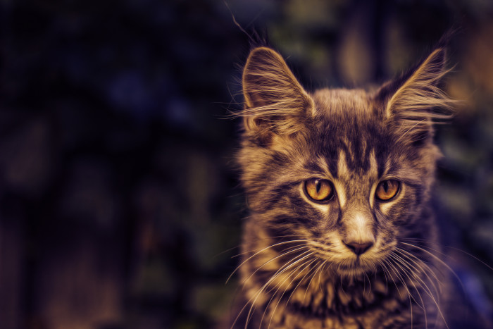 7. Maine is #1 in cat lovers.