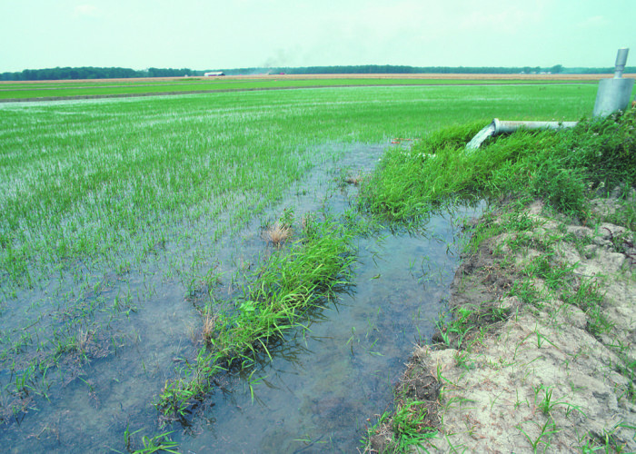 9. Arkansas produces more rice than any other state. Rice production in Arkansas is a $6 billion industry. That means the rice industry brings almost as much money into the state as all of Dillard's, the Little Rock based national retail chain.