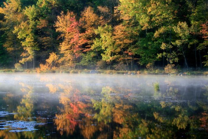 6. Colorful fall foliage.