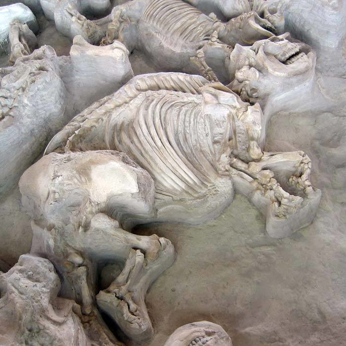 Ashfall Fossil Beds Is One Of Nebraska S Best Historical Sites
