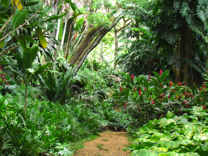 11. Alan Grant discovers that the dinosaurs have discovered how to reproduce after stumbling across the raptor nest at another National Tropical Botanical Garden site. This is Allerton Garden, and it is the same location where Jurassic Park's maintenance shed was constructed.