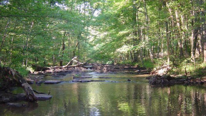 11. Creech Hollow Trail - 1.7 miles