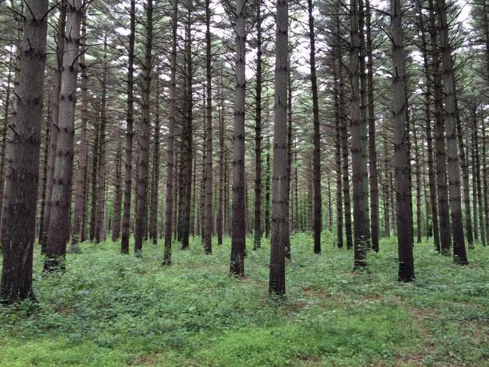 12. Blackbird State Forest, Smyrna