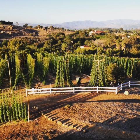 4. San Diego Golden Hop Farm in Fallbrook