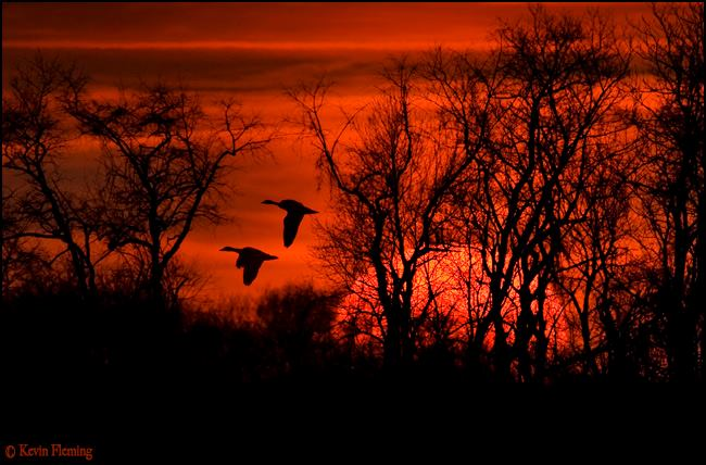 9. A red sky at night is a sailor's delight.  These geese thought it was pretty amazing too I bet.