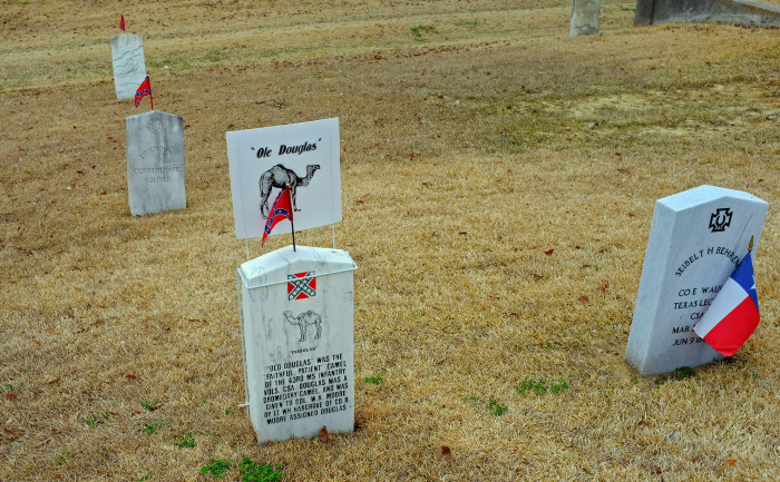 12. Among the graves that fill Vicksburg's Cedar Hill Cemetery is one belonging to a camel by the name of Old Douglas.
