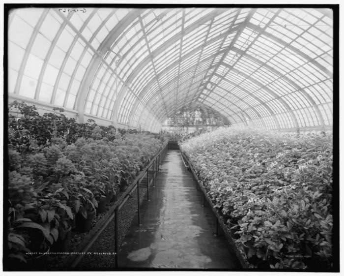 A greenhouse at Phipps Conservatory in the early 1900s.