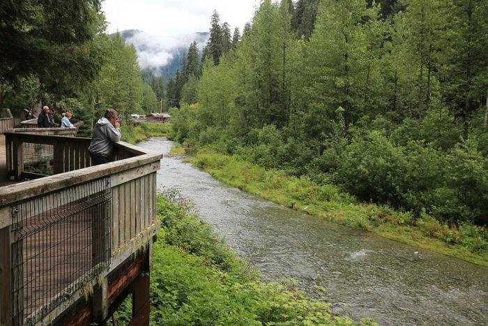 1200px-2015-08-07_Fish_Creek,_Hyder,_Alaska_1061