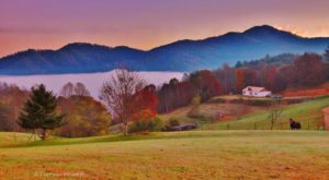 These 14 Charming Farms In North Carolina Will Make You Love The Country