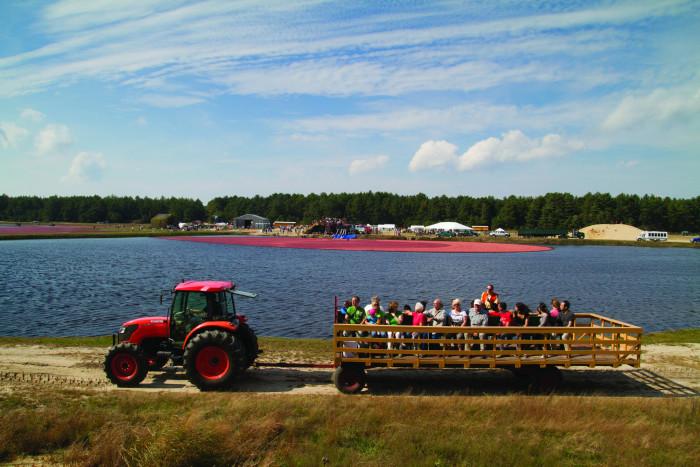 13. Cranberry Harvest Celebration, Wareham