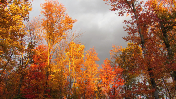 2. The smell and fall foliage of autumn