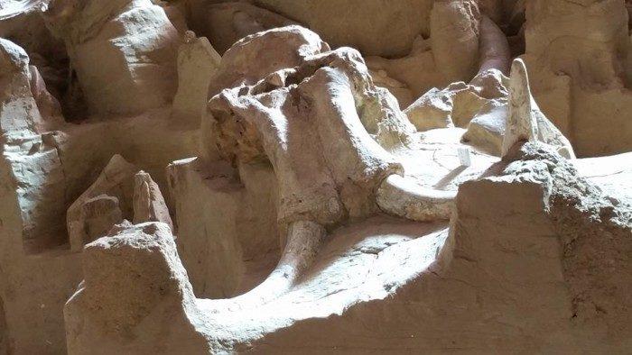 South Dakota: Mammoth Site