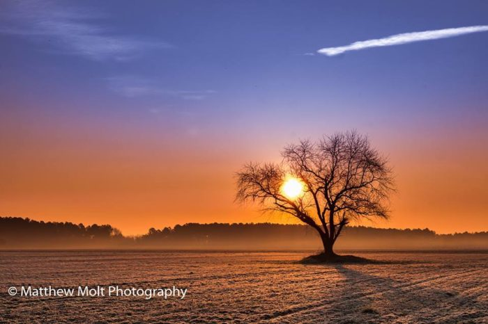 6. Sun light shinning through the tree and a thin layer of fog in the background make for a beautiful morning.