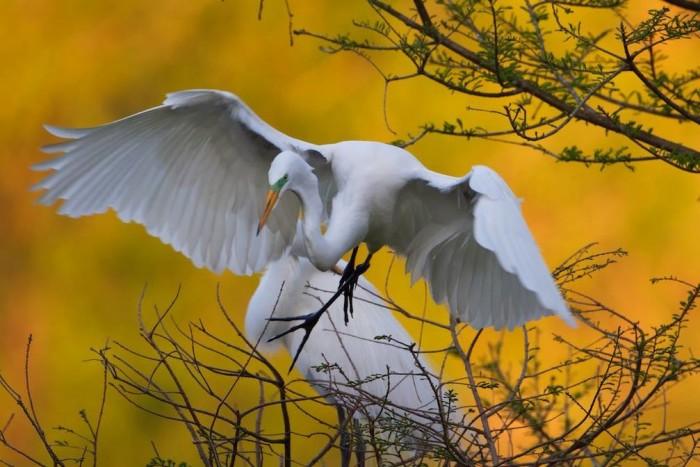 5. In 1895, E.A. McIlhenny (aka Mr. Ned) began Bird City as a wild bird refuge.