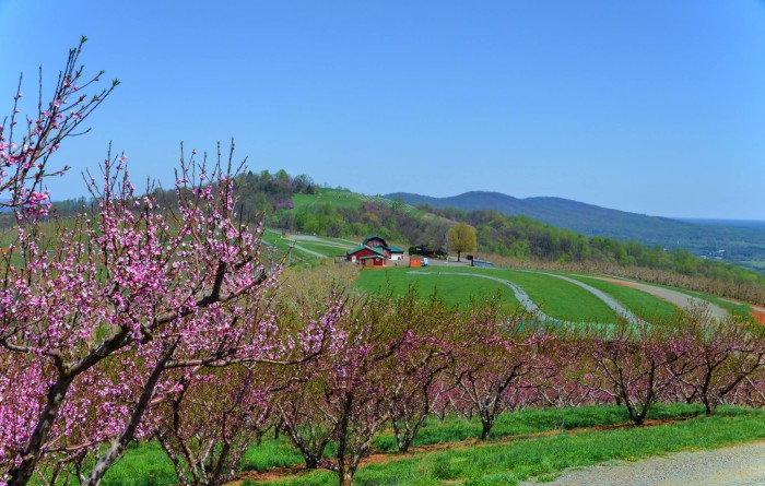 9. The orchards are alive and well.