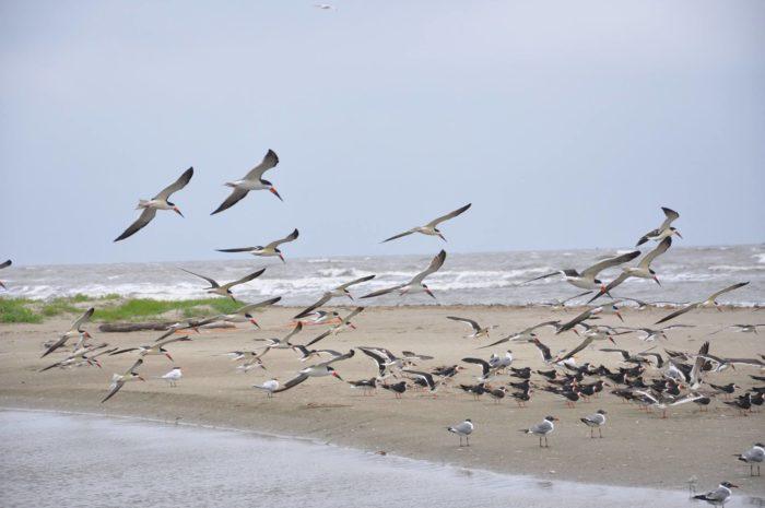 2. Go bird watching on Grand Isle Cost: Free